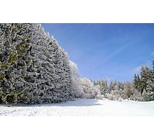 Beautiful perspective natural landscape with frosty trees, winter fairy tale Photographic Print