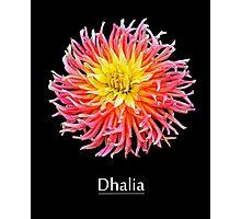 Dhalia Photographic Print