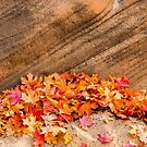 AUTUMN LEAVES - ZION NP by RGHunt