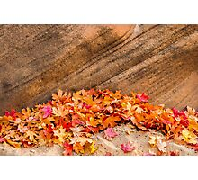 AUTUMN LEAVES - ZION NP Photographic Print