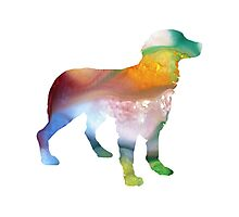 Brittany Spaniel Photographic Print