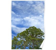 Sky and Trees Poster