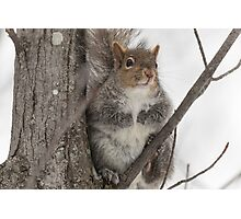 Grey squirrel in a tree Photographic Print
