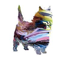 Caim terrier Photographic Print