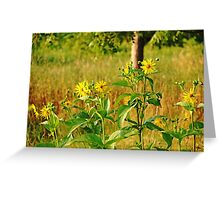 Golden Yellow Ray Florets Greeting Card