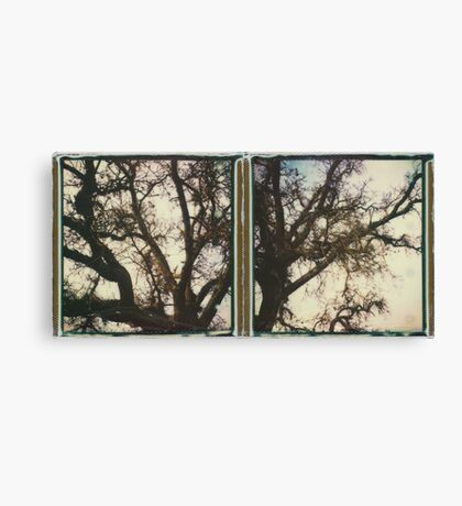 them big oak trees Canvas Print