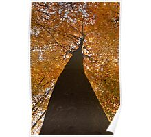 Frog perspective autumn tree Poster