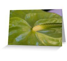 anthurium flower in the garden Greeting Card