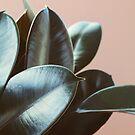 Ficus Elastica #2 by ALICIABOCK