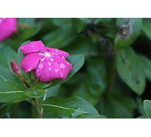 Water Petals Photographic Print