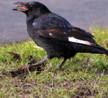 Hungry crow Sticker