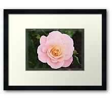 Pink rose in frame Framed Print