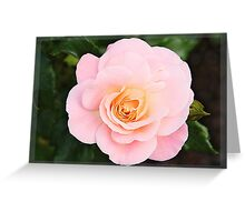 Pink rose in frame Greeting Card