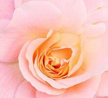 Pink rose in frame Sticker