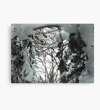 Looking Through the Snow Canvas Print
