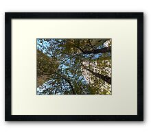 A Trio of Trees and Skyscrapers by Leebabe Framed Print