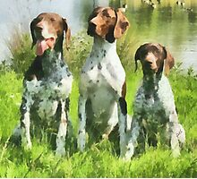 German Shorthaired Pointer Trio Photographic Print