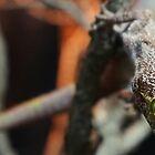 Gecko  by Dave Cauchi