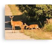 Doe With Two Fawns Canvas Print