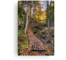 Walkway through the woods Canvas Print