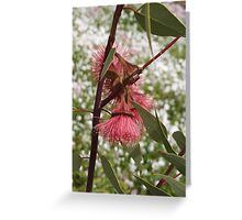 Eucalyptus rameliana Greeting Card