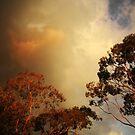 Blackburn Storm Coming by wellman