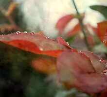 Rose Leaves 'n' Raindrops (6) by Lozzar Flowers & Art