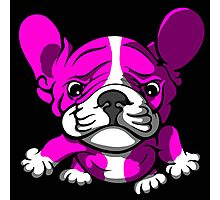 French Bull Terrier Cartoon Pink  Photographic Print
