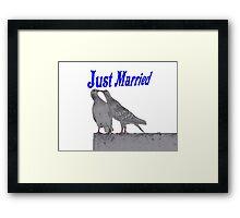 Just Married Pigeons - NZ Framed Print