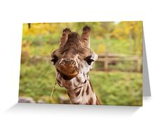 Hilarious Giraffe - Nature Photography Greeting Card