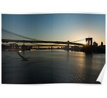 Soaring - Brooklyn Bridge Sunrise with a Seagull Poster