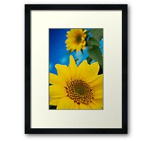 Summer Yellow Sunflowers Against a Deep Blue Sky Framed Print
