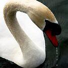 Profile in Mute Swan  by ArtbyDigman