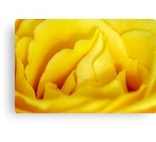 Rose macro Canvas Print