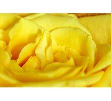Yellow rose macro Photographic Print