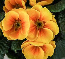 Spring Has Sprung! by Heather Friedman