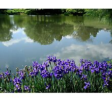 Irises at the Lake     ^ Photographic Print