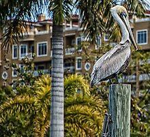 All Hail the Pelican King!  by John  Kapusta