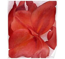 Georgia O Keeffe - Red Cannas 1927 Poster