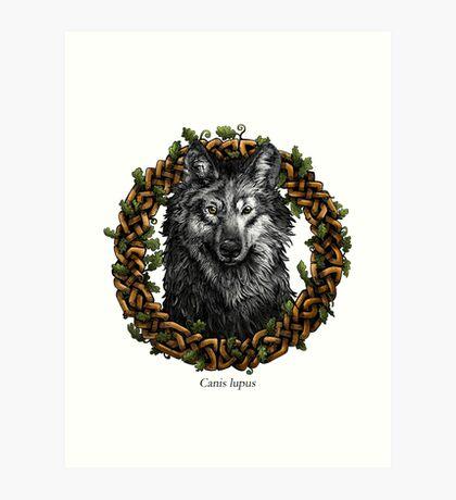 Canis Lupus - Gray Wolf Art Print