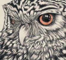Midnight Little Owl Sticker