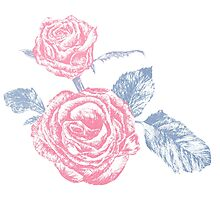 Rose colored ink sketch  Photographic Print