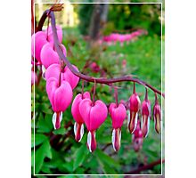 Spring and Love Photographic Print