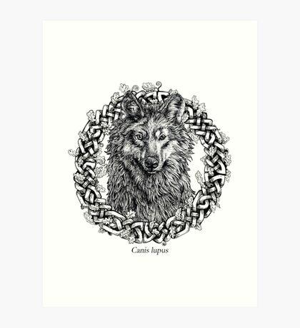 Canis Lupus - Gray Wolf - Black & White Version Art Print