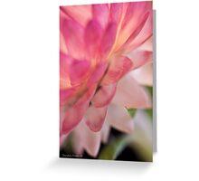 Straw Flower Macro Greeting Card