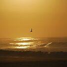Dawn Sunrise  by salsbells69