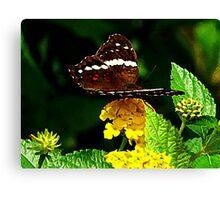 Black Butterfly on Yellow Lantana Canvas Print