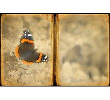 Red Admiral with Book Texture Photographic Print