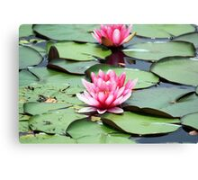 Water Lilly Flower Canvas Print