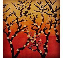 Japanese Cherry Blossom Tree Photographic Print
